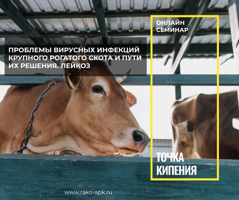 Академия в тренде: участие в Точке кипения — Проблемы вирусных инфекций крупного рогатого скота и пути их решения. Лейкоз