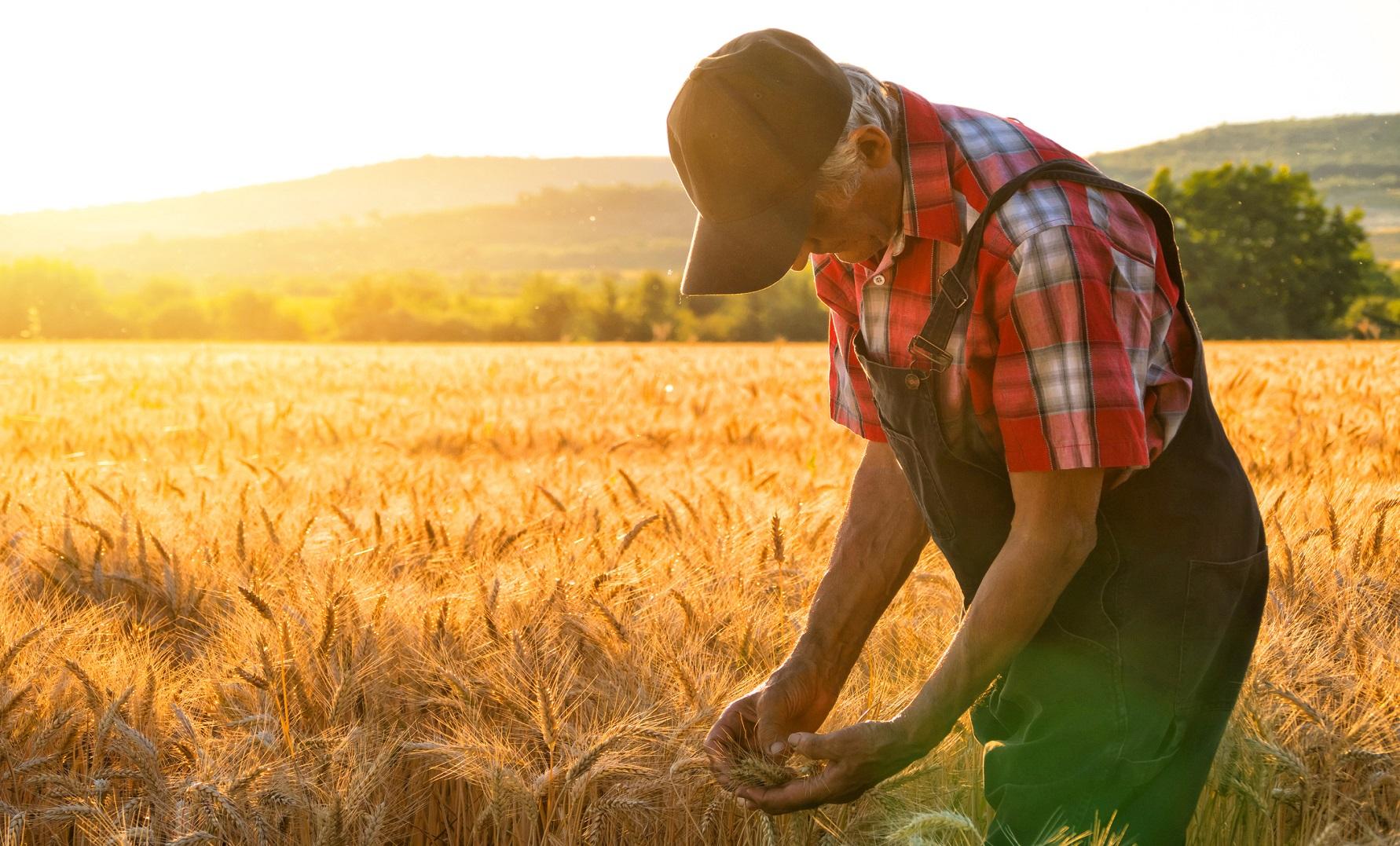 Организация малого бизнеса в аграрной сфере