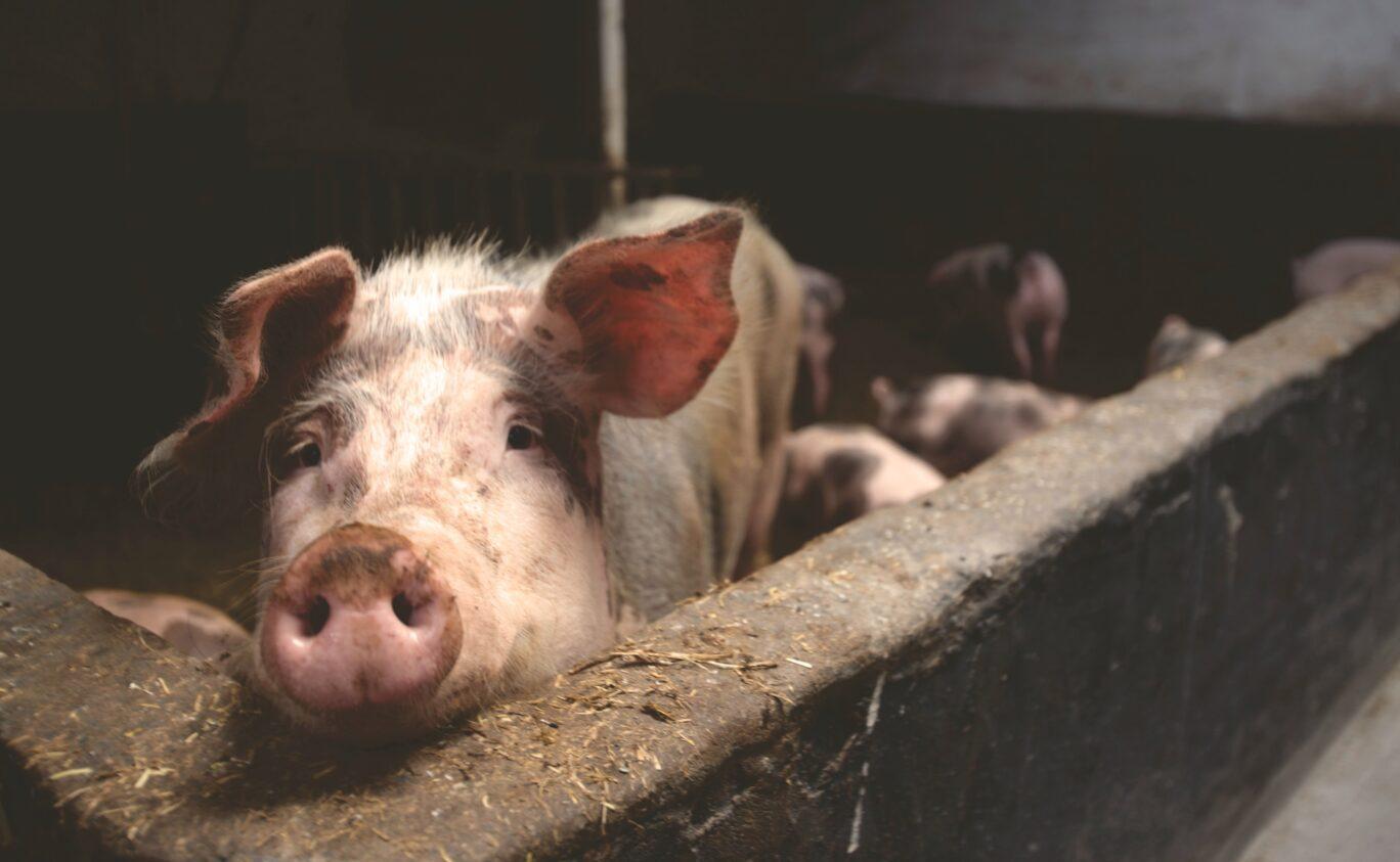 Ветеринарно-санитарная экспертиза сырья и готовой продукции животного и растительного происхождения